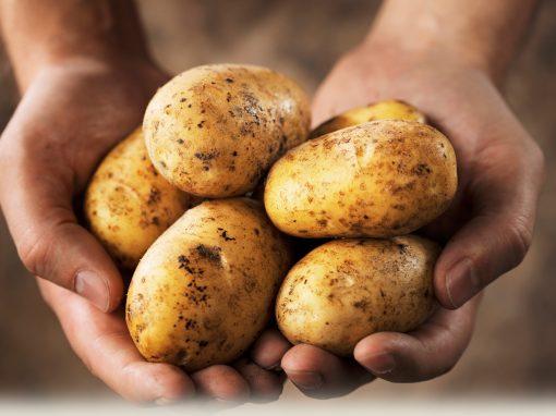 Kartoffelbalsam